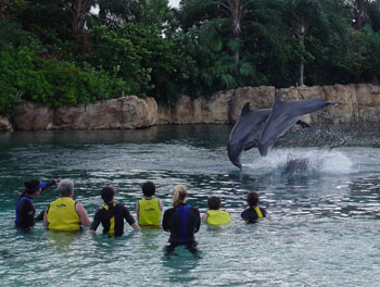 Discovery Cove Dophins doing tricks