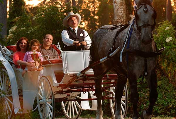 Disney World Carriage Rides