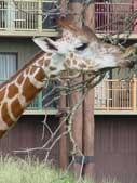 Disney S Animal Kingdom Lodge Room Layouts Wdwinfo Com