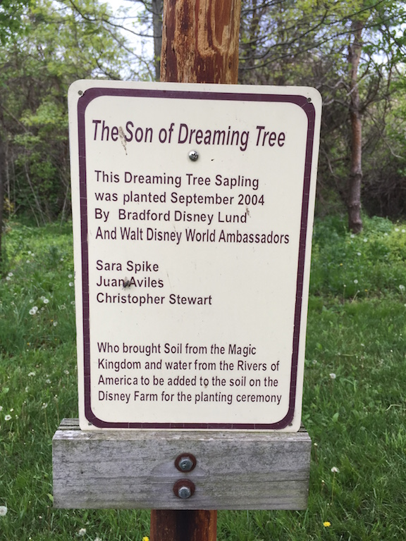 Son of Dreaming Tree