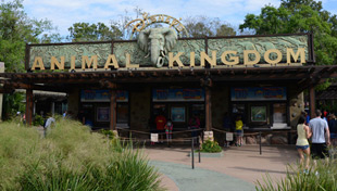 Animal Kingdom Updates