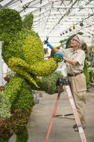 Mickey Mouse Topiary Preps for Festival