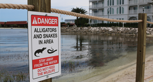 Search suspended for alligator responsible for deadly attack at Disney hotel