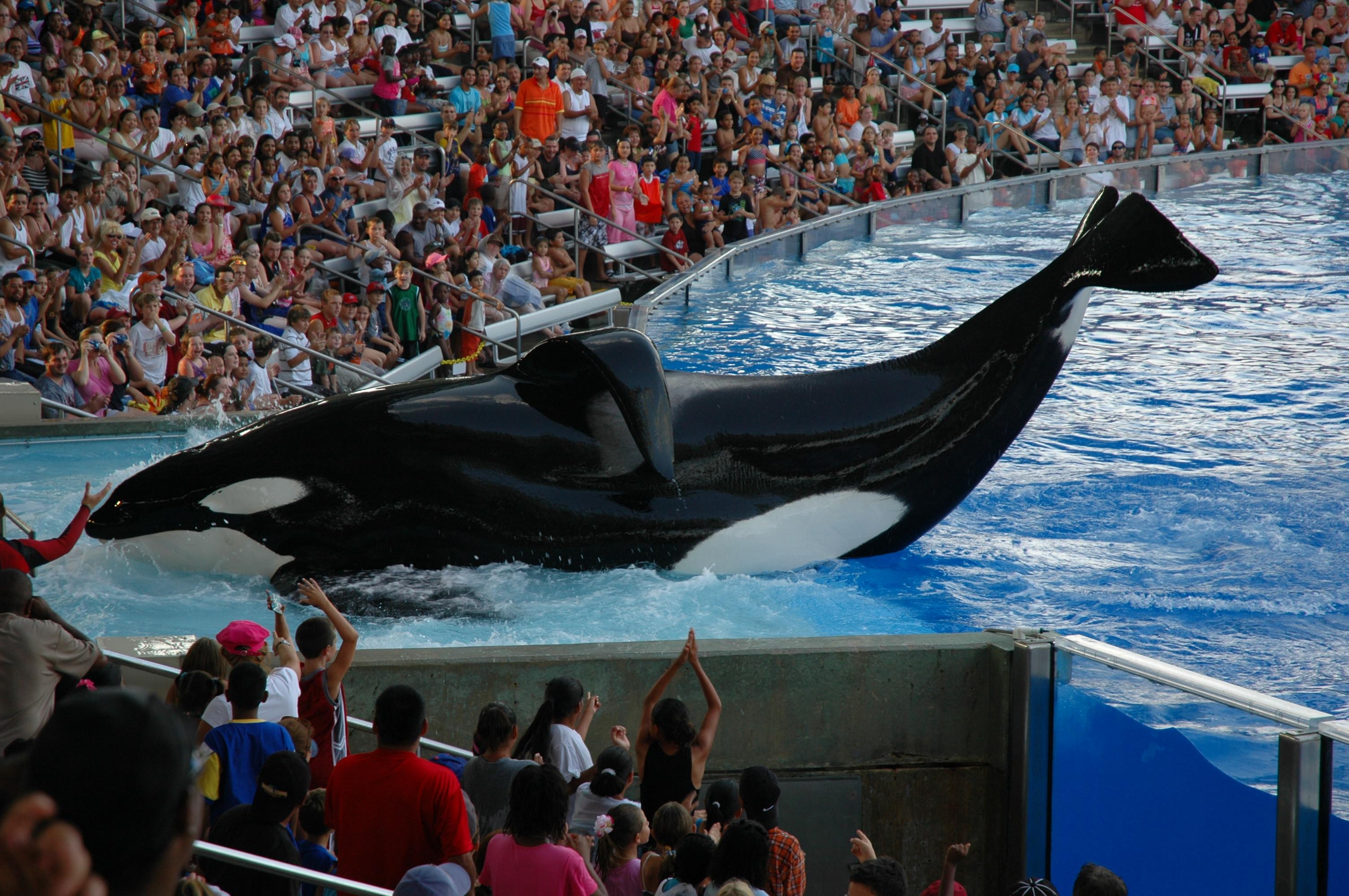 Shamu_Stadium_SeaWorld_Orlando_Florida