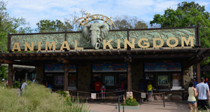 Budget Food Review for a Day at Animal Kingdom