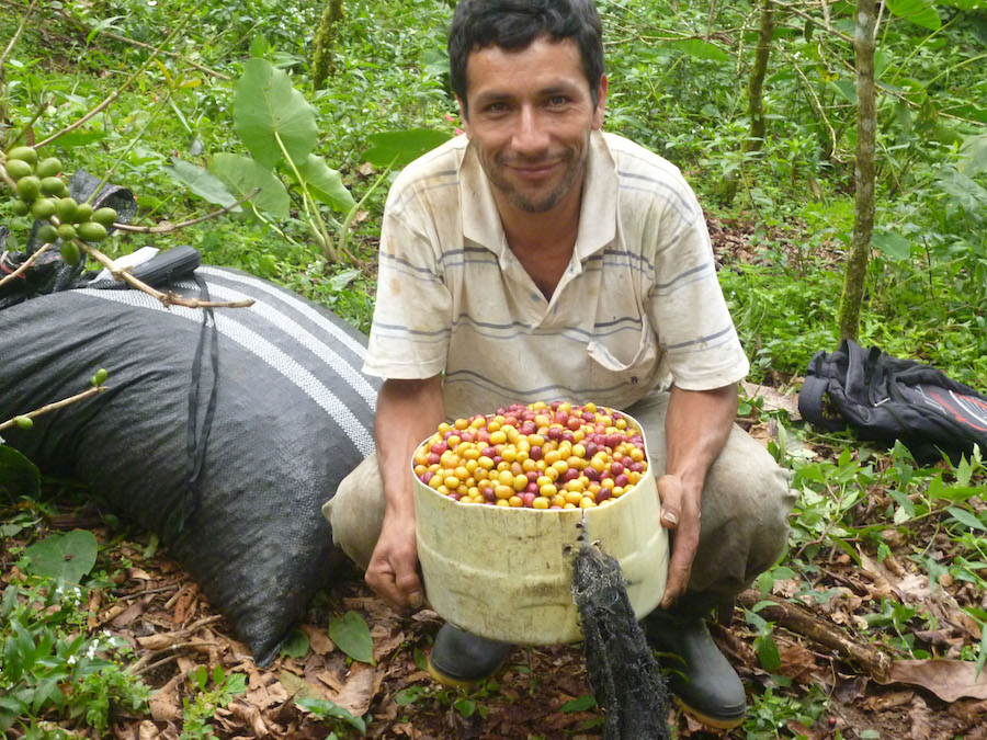 Ylder Cotrina, a coffee farmer and beneficiary of the Alto Mayo Conservation Agreements
