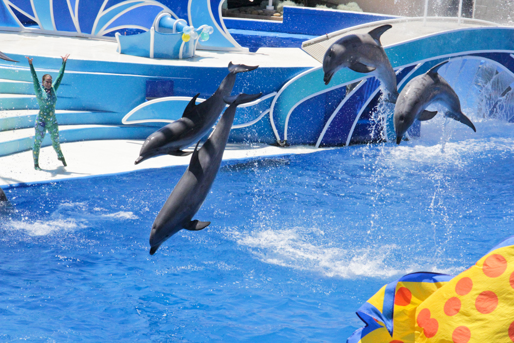 Seaworld Orlando Replacing The Blue Horizons Show With Dolphin Days