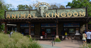 5 Mistakes Families Make at Disney's Animal Kingdom Park