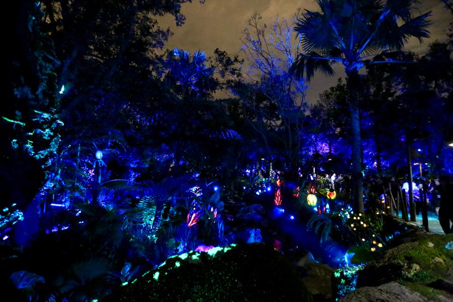 Pandora-Night-026