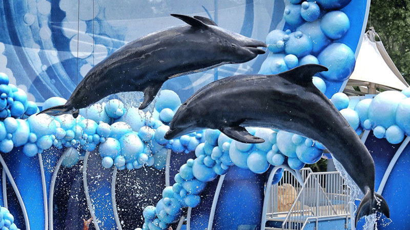 os-seaworld-dolphin-days-20170322-(1)