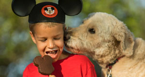 Thoughts From the DISBoards On Allowing Dogs at Walt Disney World Resort Hotels