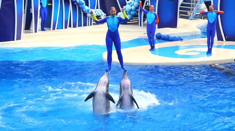 dolphin-days