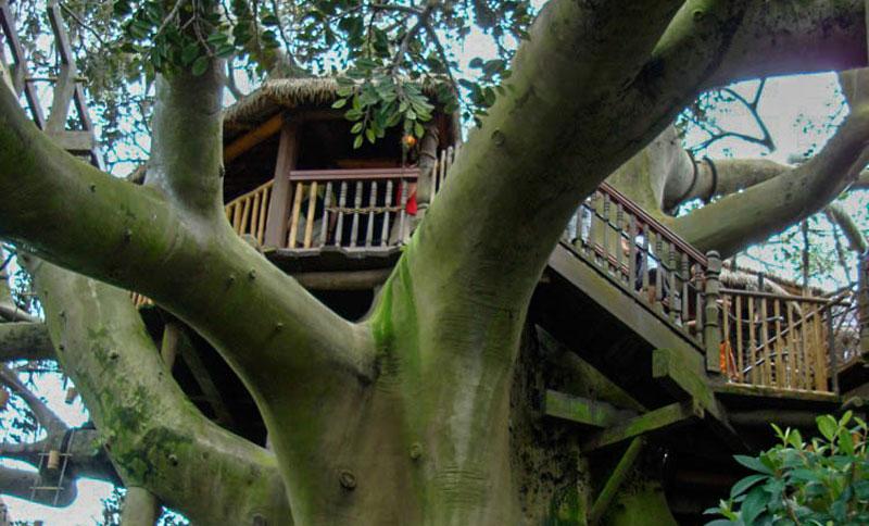 Swiss-Family-Treehouse-2-2