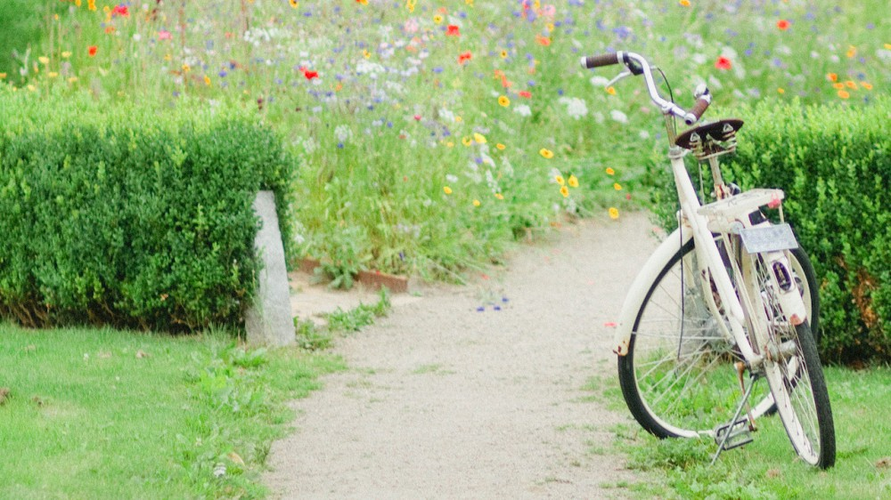 Wild flowers and a bike