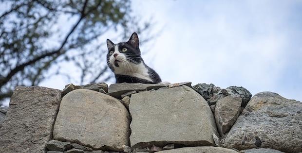 Feral cat 2