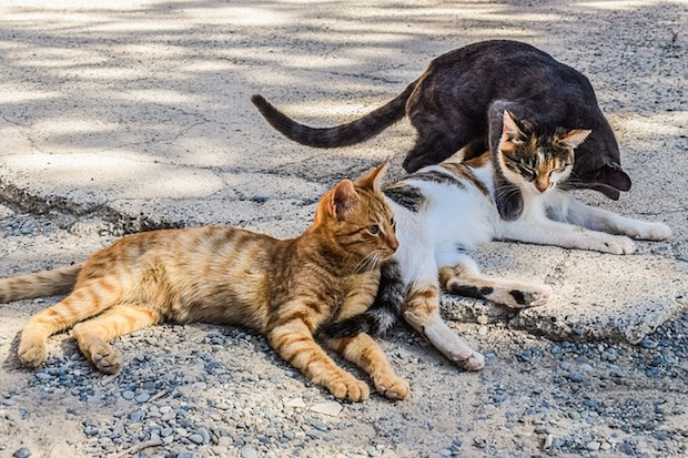 feral cats 3