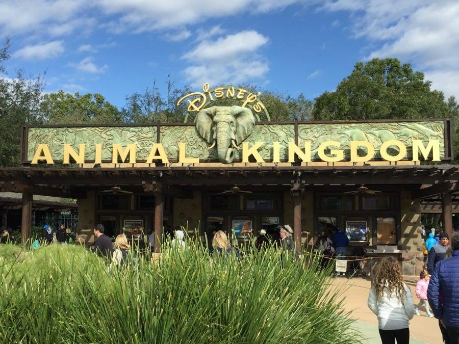 Resultado de imagen para ANIMAL KINGDOM