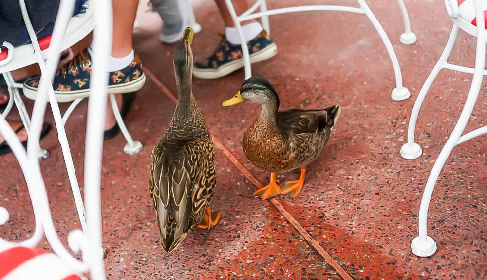 Casey's Ducks