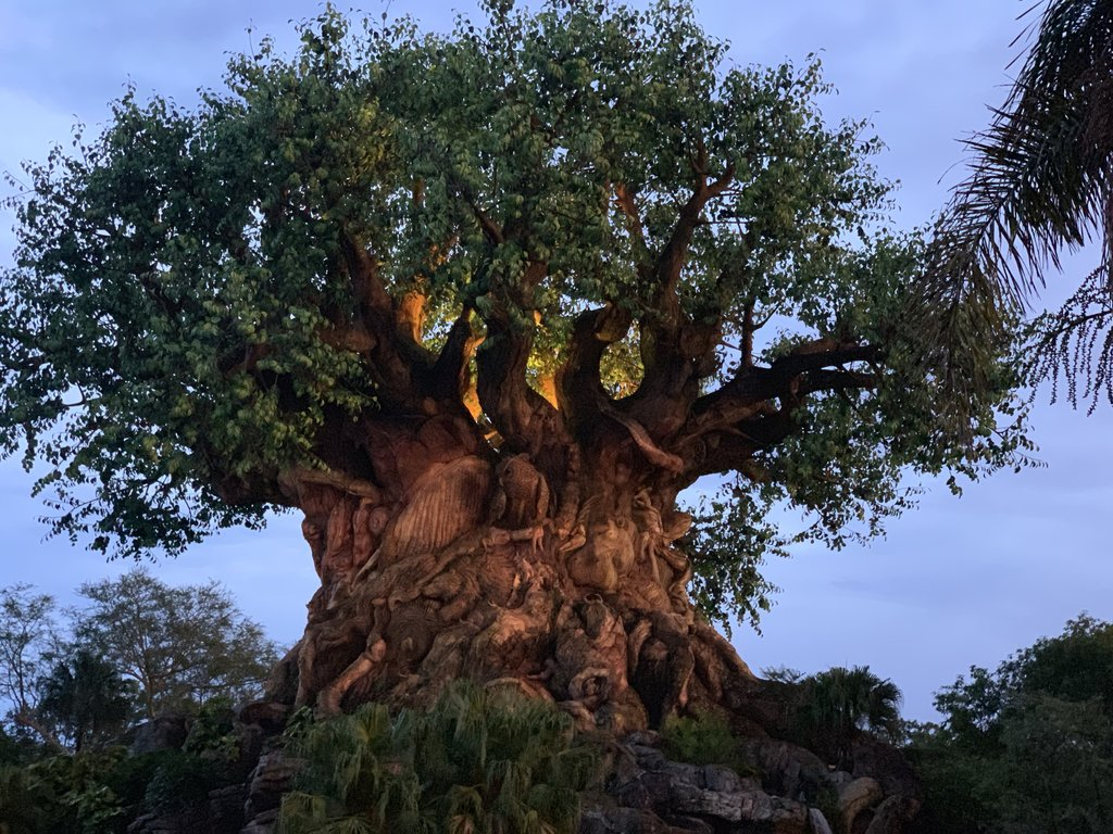 Experiencing Disney After Hours at Animal Kingdom
