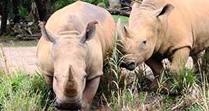 Go Wild: Tips and Tricks for Enjoying Kilimanjaro Safaris!